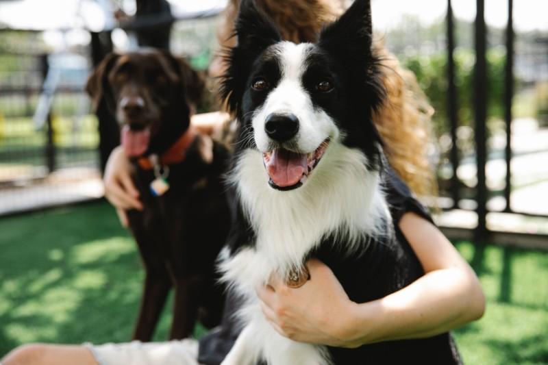 Border Collie o jakich zasadach odżywiania psa powinniśmy pamiętać
