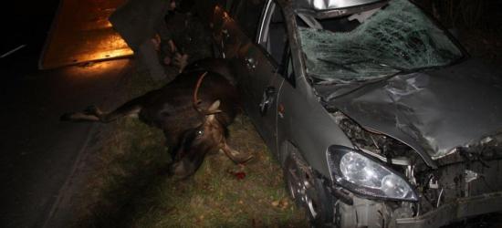 KRONIKA POLICYJNA: Dzikie zwierzęta na drodze, złodzieje zboża i głośni awanturnicy
