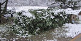 """Akcja """"Choinka – 17″. Leśnicy będą chronić drzewostany i młodniki iglaste (ZDJĘCIA)"""