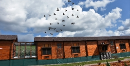 Pokonały setki kilometrów. Mistrzostwa w lotach gołębi pocztowych w Przysietnicy (ZDJĘCIA)