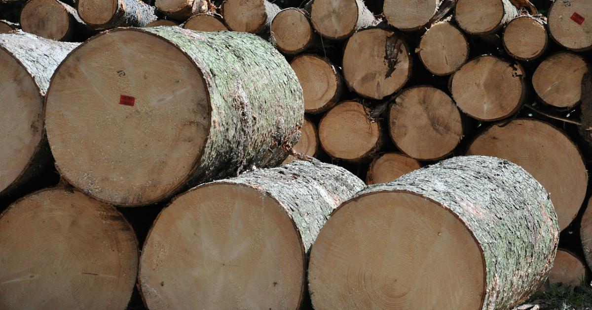Odpowiedzą za kradzież drewna z lasu