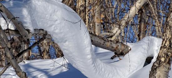 Ogromna tragedia w domaradzkim lesie. 80-latek zginął przygnieciony przez drzewo