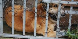 BRZOZÓW: Przygarnij mnie! Piesek czeka na właściciela (ZDJĘCIA)