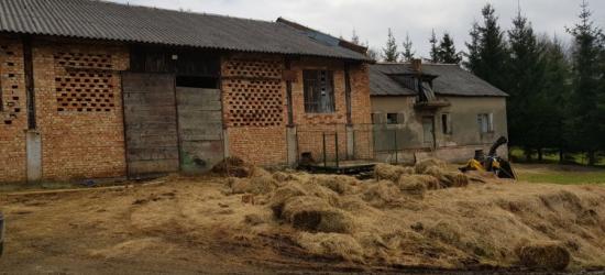 Skandaliczne warunki w gospodarstwie. Fetor od czterech padłych koni, psy karmione ich mięsem (ZDJĘCIE)