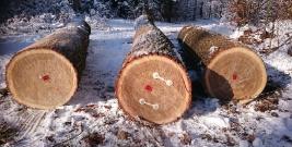 Kupcy z Austrii, Estonii, Niemiec, Słowacji, a nawet Japonii przyjeżdżają po cenne drewno do Polski